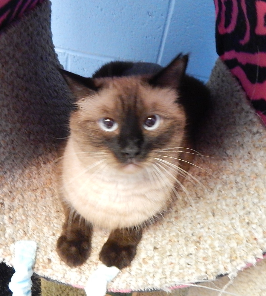 Featured Shelter Animals August 21, 2015