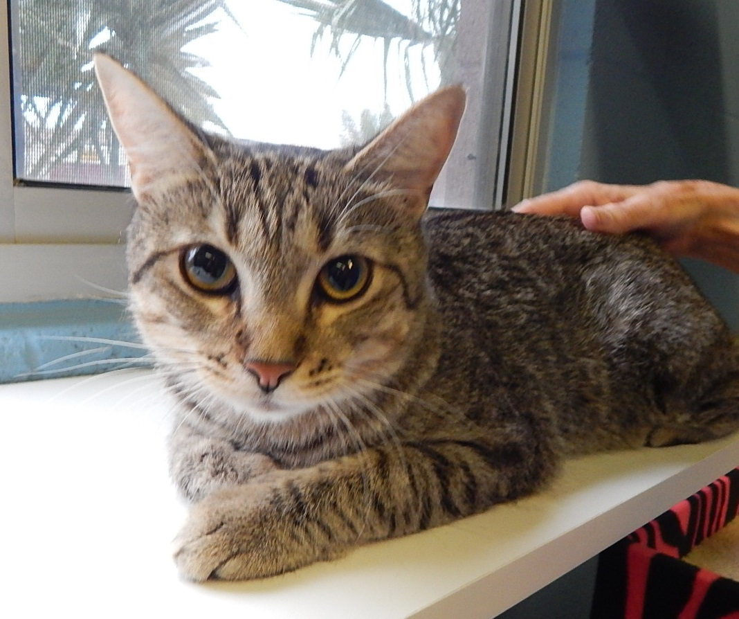 Featured Shelter Animals August 17, 2015