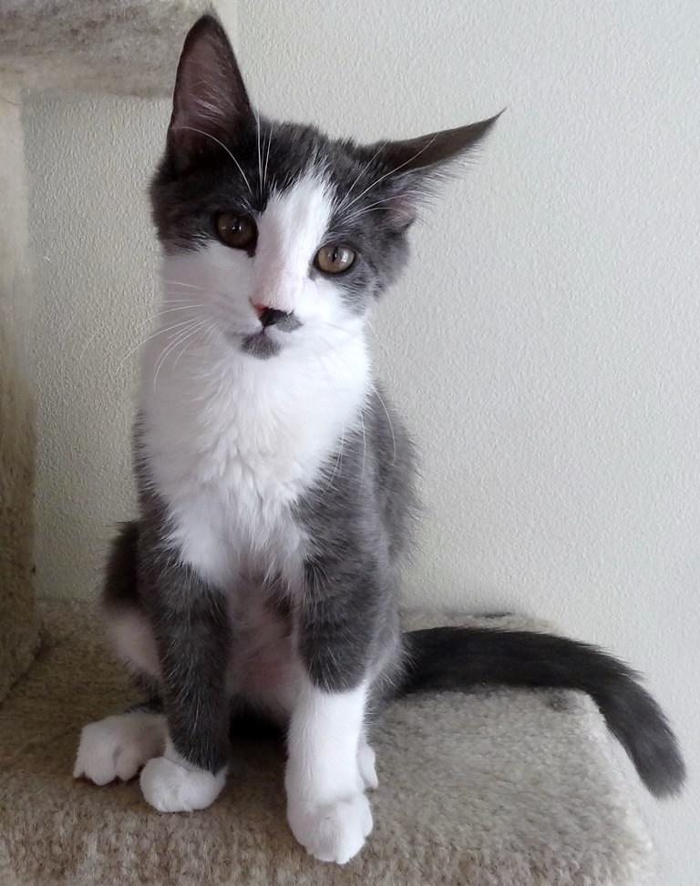 WCFA Pets Needing People August 26, 2015