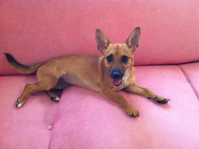 WCFA Pets Needing People August 5, 2015