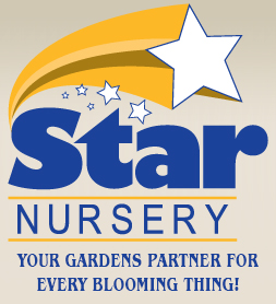 Chamber Mixer at Star Nursery open to public