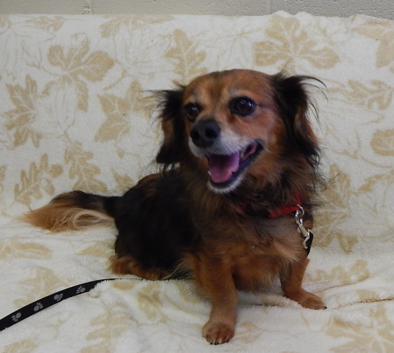 Featured Shelter Animals Sept. 21, 2015