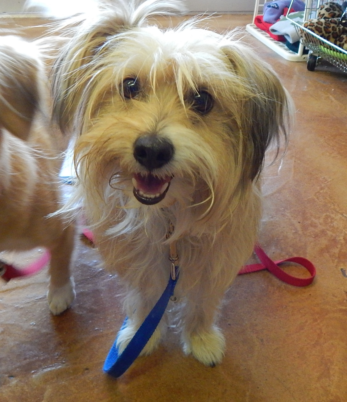 Featured Shelter Animals Sept. 11, 2015