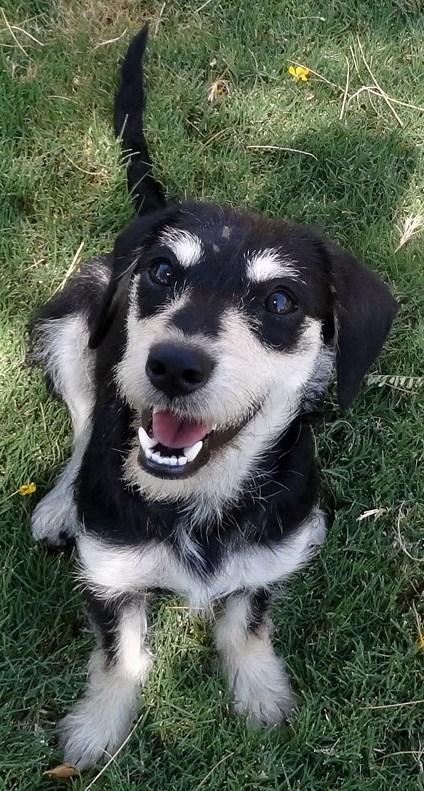 WCFA Pets Needing People Sept. 9, 2015