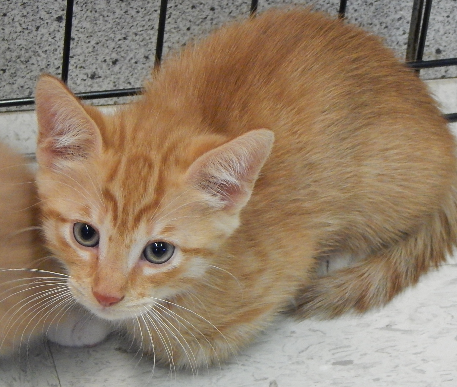 Featured Shelter Animals Oct. 24, 2015