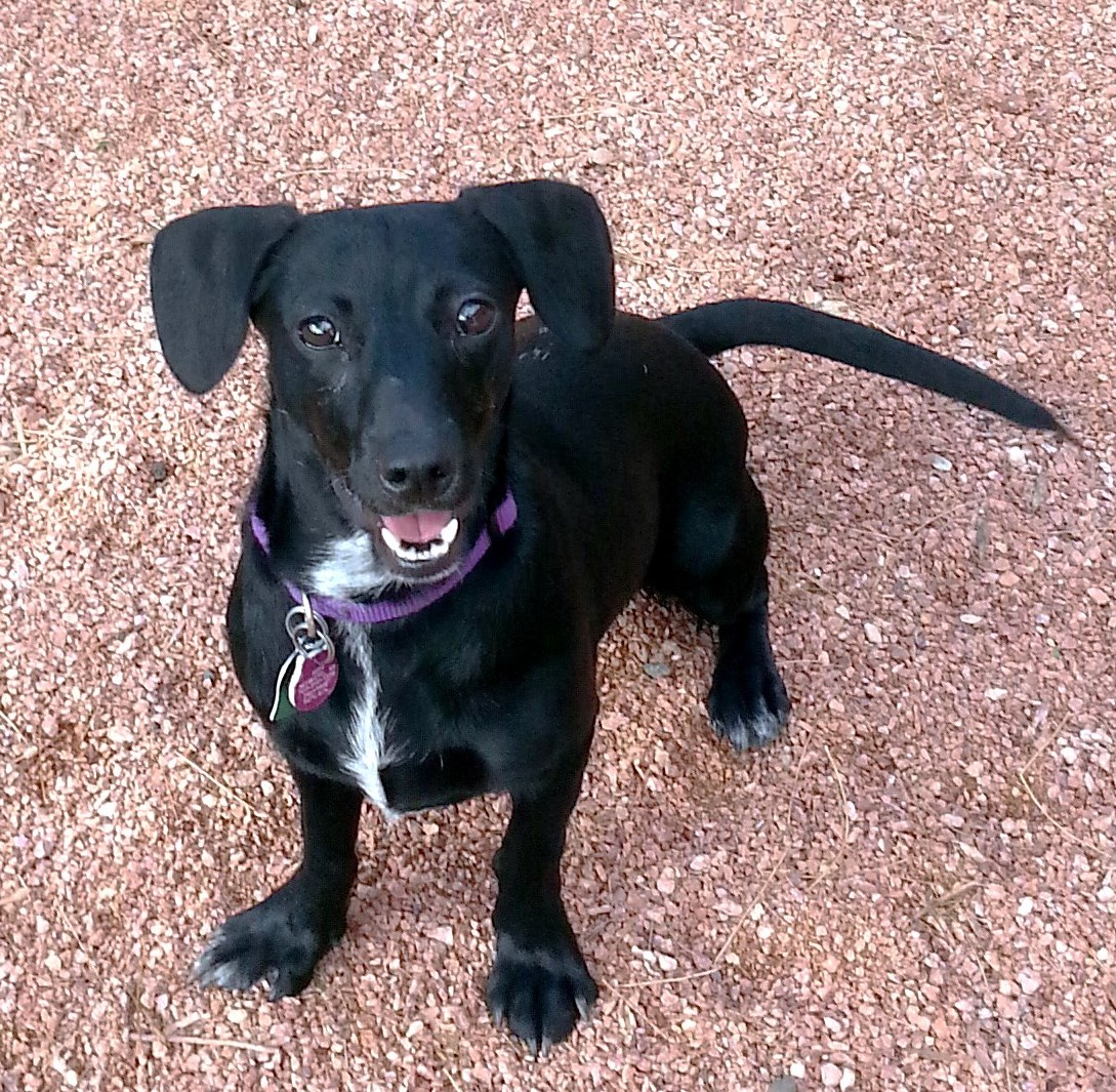 WCFA Pets Needing People Oct. 24, 2015