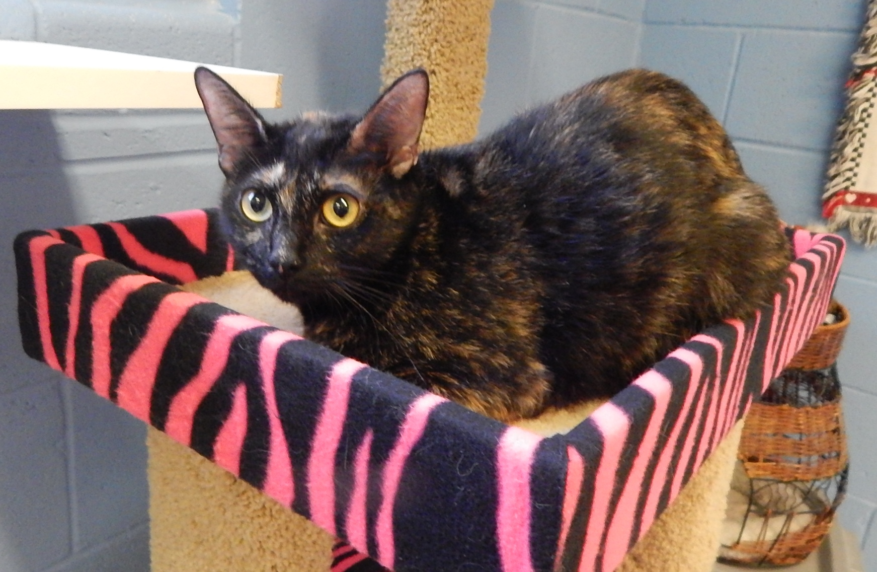 Featured Shelter Animals Oct. 16, 2015