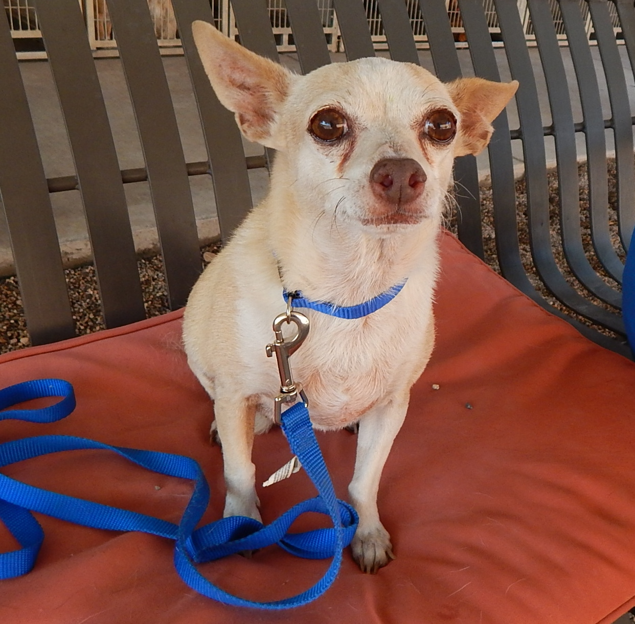 Featured Shelter Animals Oct. 2, 2015