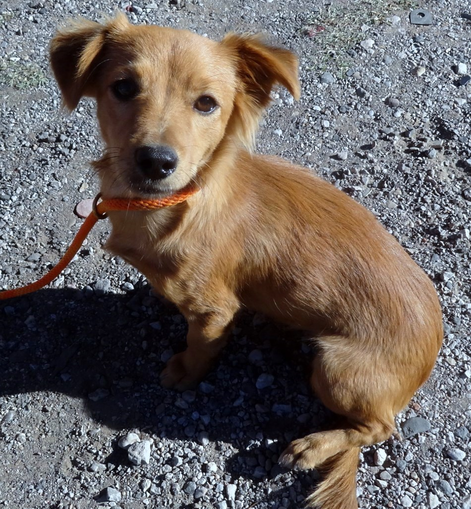 WCFA Pets Needing People Nov. 11, 2015