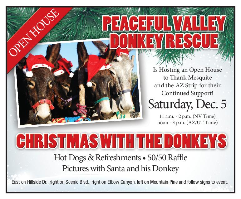 Enjoy Christmas with the Donkeys