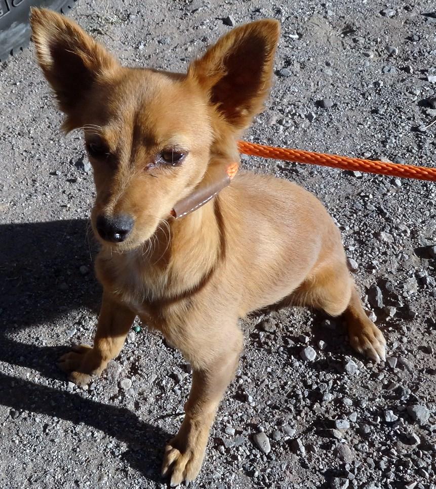 WCFA Pets Needing People Nov. 18, 2015