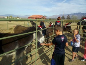 Nehemiah Flatt feeds a cheese puff to one of the donkeys who was eager to take the treat out of his hands and the hands of the many visitors who chose to spend Christmas with the Donkeys at the Peaceful Valley Donkey Rescue in Scenic, AZ on Dec. 5. Photo by Teri Nehrenz.