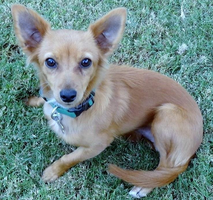 WCFA Pets Needing People: Huck