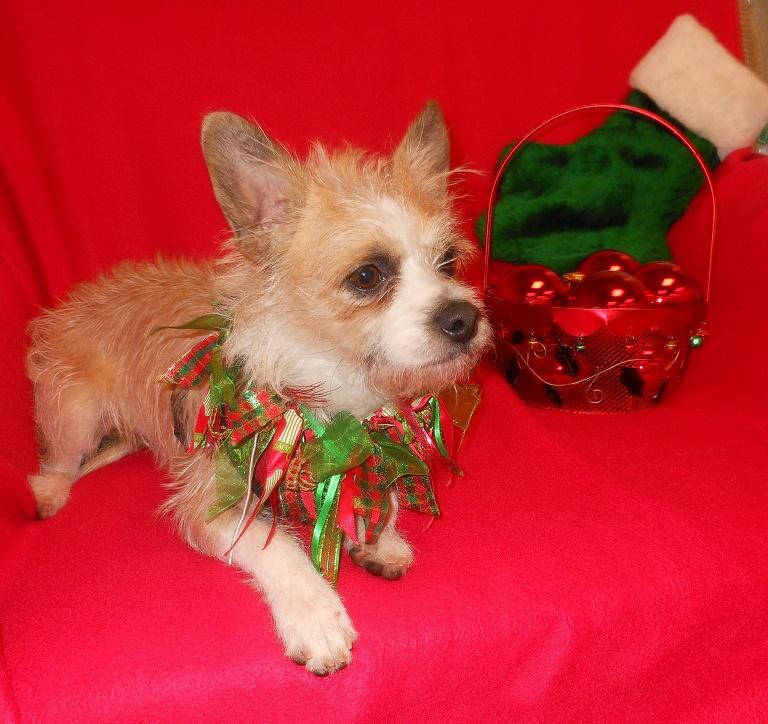 WCFA Pets Needing People Dec. 16, 2015