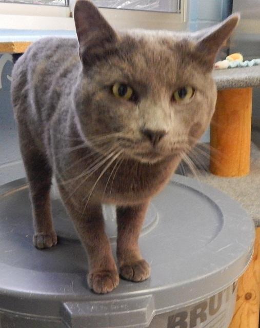 Mesquite Animal Shelter Pet Listing January 8, 2016