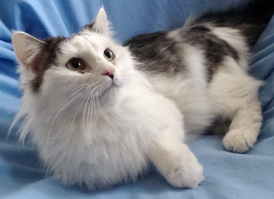 WCFA Pets Needing People: Belle