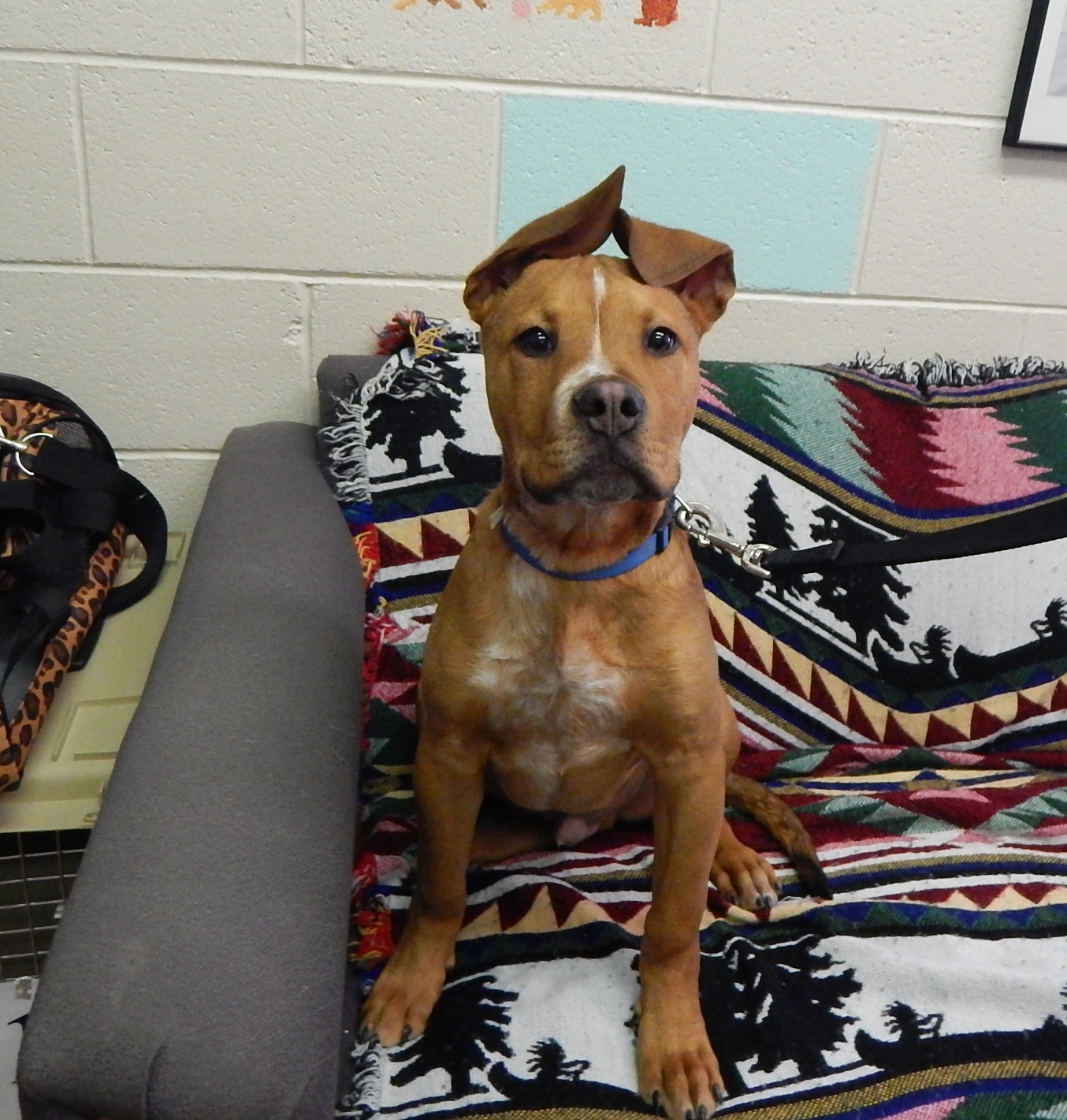 Featured Animal Shelter Pets Jan. 4, 2016