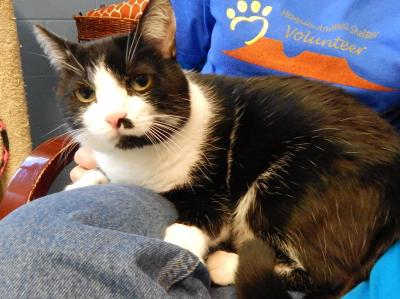 Featured Shelter Animals for Feb. 12, 2016