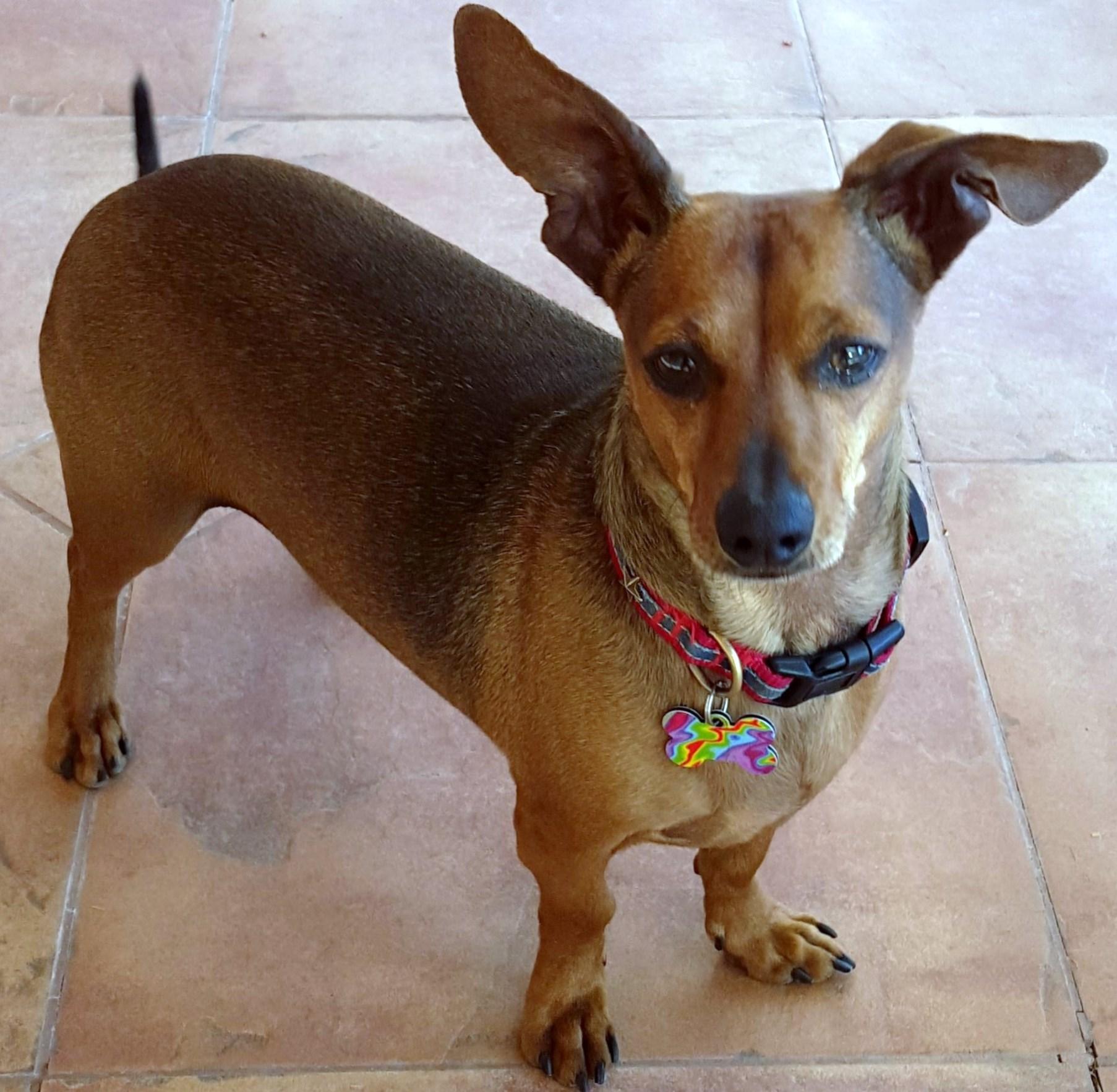 WCFA Pets Needing People: Brady