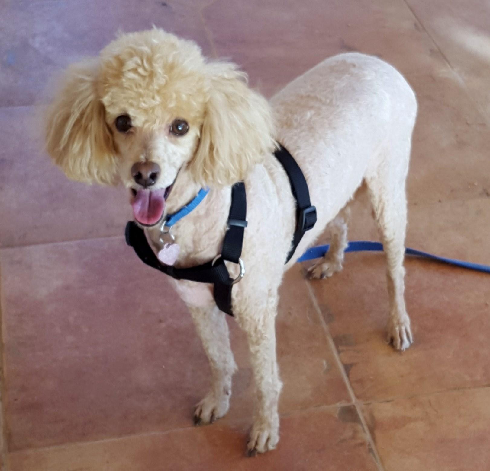WCFA Pets Needing People: Harley