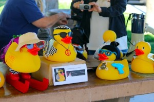 Ducks for the Mesquite Chamber of Commerce's Third Annual Ducky Derby were dressed to the nines by local businesses and waiting for the Duck around Town Race to begin. Photo by Teri Nehrenz.