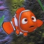 Nemo Found in Hafen Pond