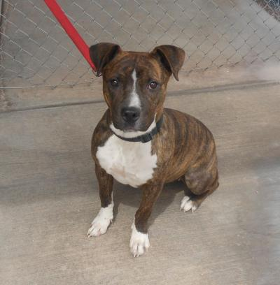 Mesquite Animal Shelter Pet Listing May  20, 2016