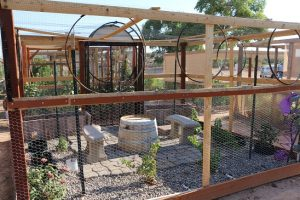 Not only do the individual plots at the Mesquite Community Heritage Gardens provide fresh vegetables, some also provide a decorative area to enjoy the outdoors. Photo by Barbara Ellestad.