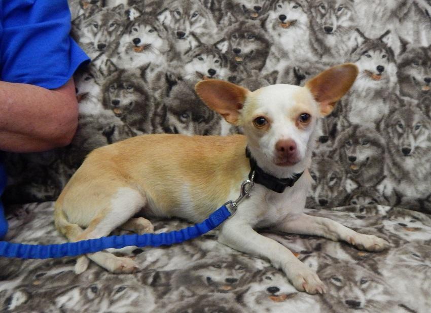 Mesquite Animal Shelter Pet Listing  June 17, 2016