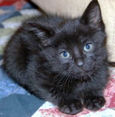 WCFA Pets Needing People: Tommy