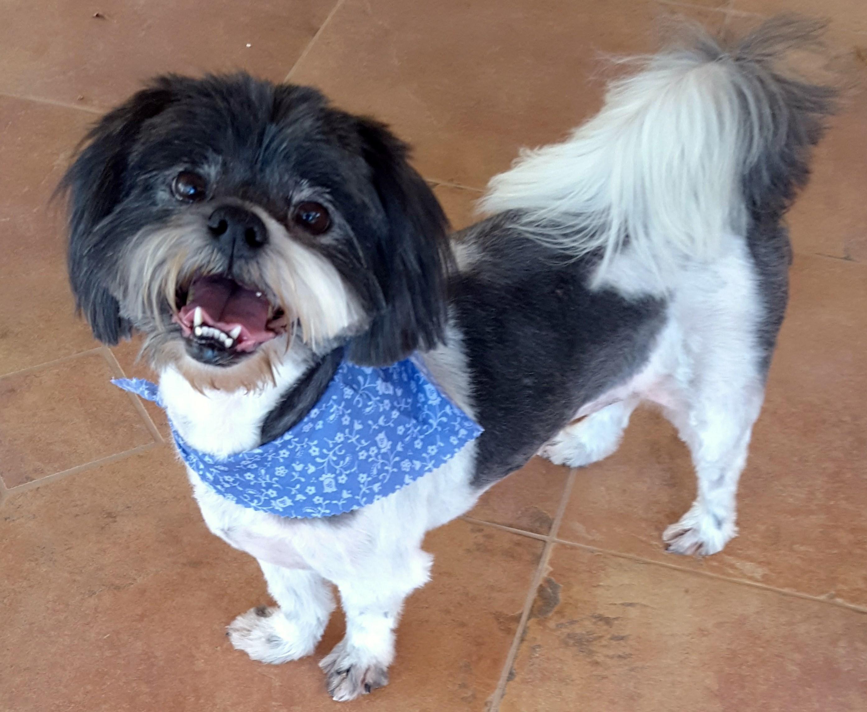 WCFA Pets Needing People