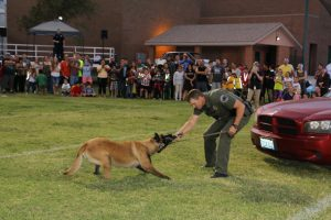 """Mesquite Police Department's K-9 Officer Noro demonstrated his abilities to sniff out drugs at the 2016 Mesquite Night Out on Sept. 21. Noro, who is now six years old, is motivated by a toy his handler, Jamie Stout, uses. When Noro sniffs out the drugs he will lay down and point with his nose to their location. Stout, who moved to Mesquite about a year ago from New Mexico, enjoys working with Noro. """"He's a really smart and talented dog,"""" he told the MLN. Photo by Stephanie Clark."""