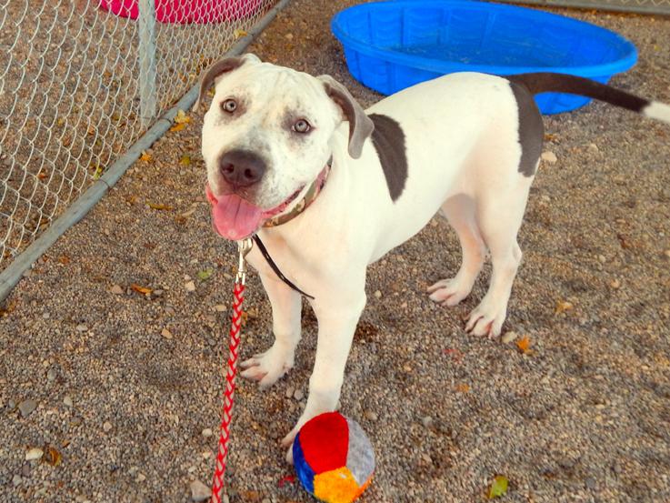 Mesquite Animal Shelter Pet Listing September 30, 2016