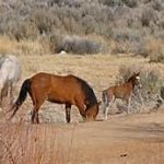 Nevada urges caution on open range