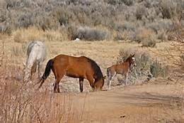 Nevada urges caution on open range