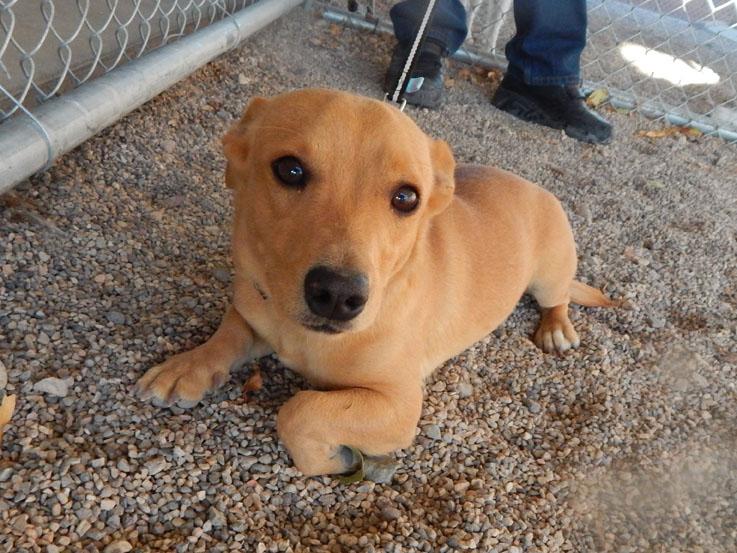 Mesquite Animal Shelter Pet Listing October 21, 2016