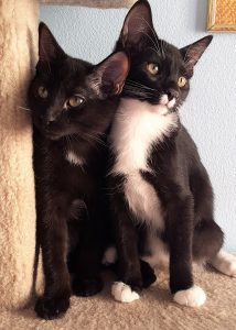 Inky and Tuck
