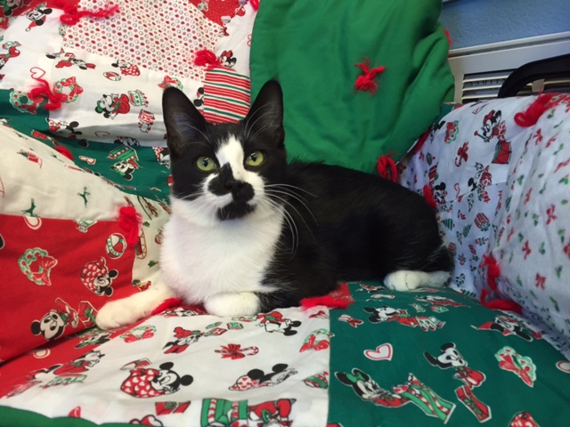 Mesquite Animal Shelter Pet Listing December 2, 2016