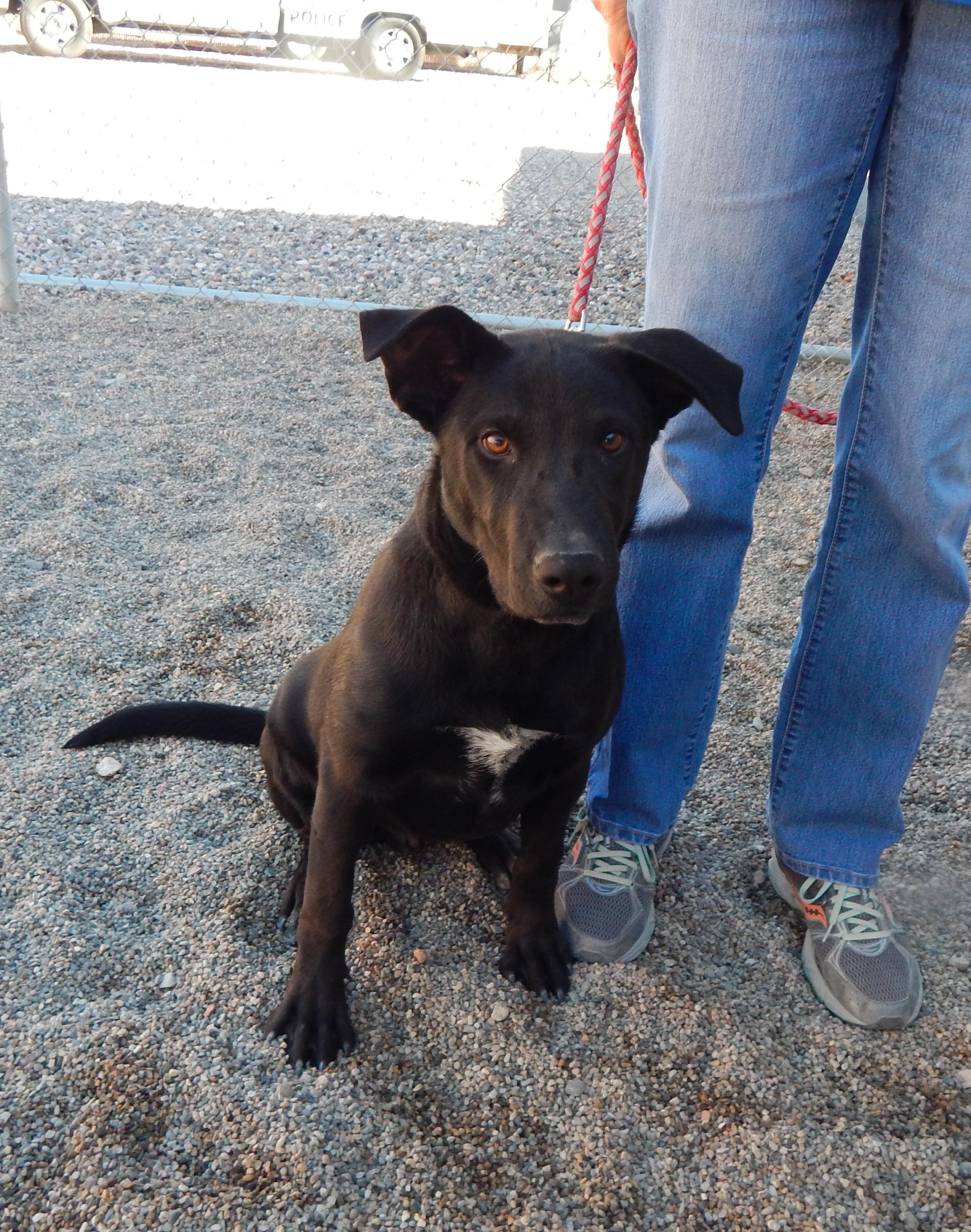 Mesquite Animal shelter Pet Listing December 9, 2016