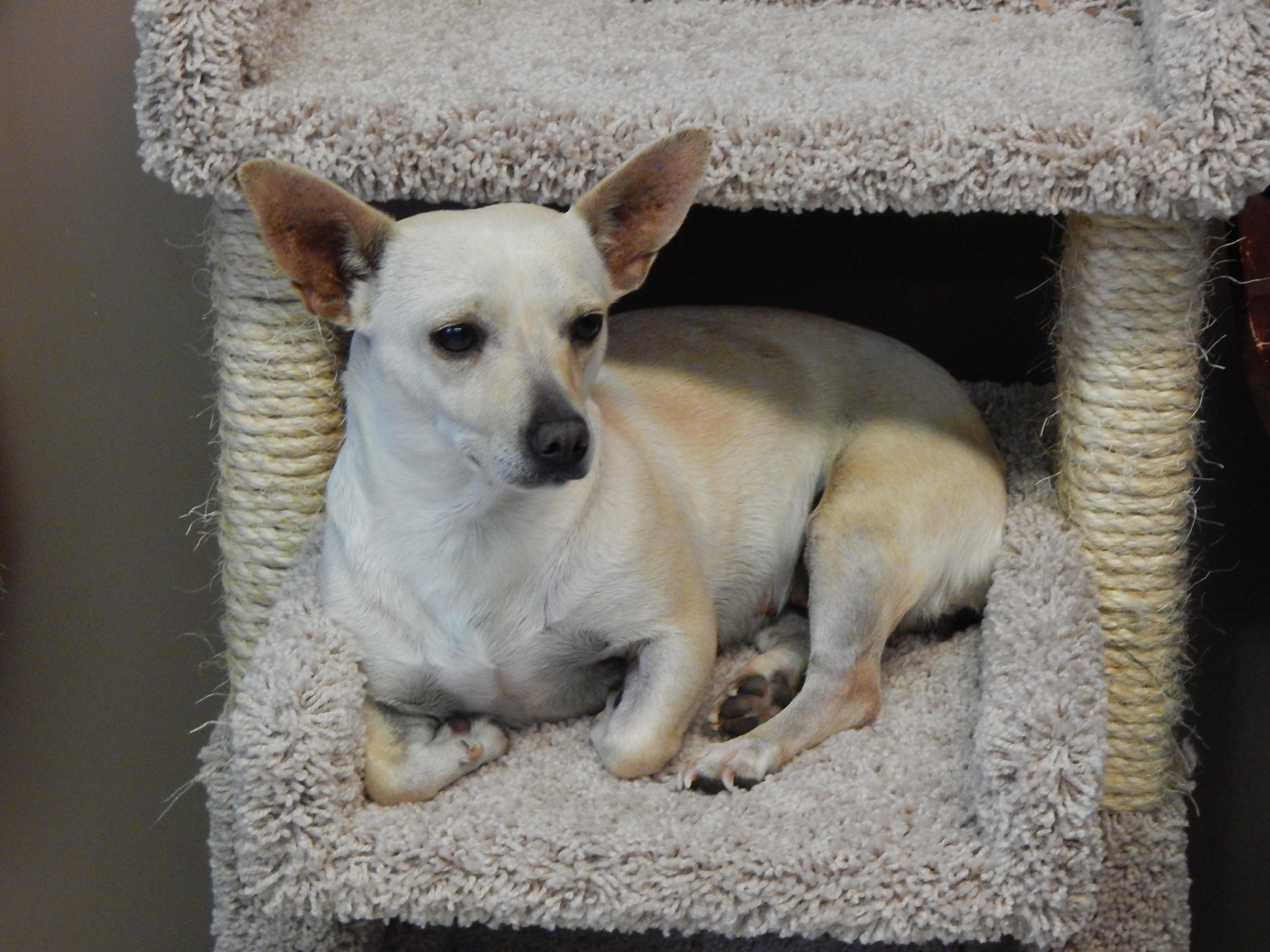 Mesquite Animal Shelter Pet Listing January 13, 2017