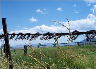 Comstock Barbed Wire