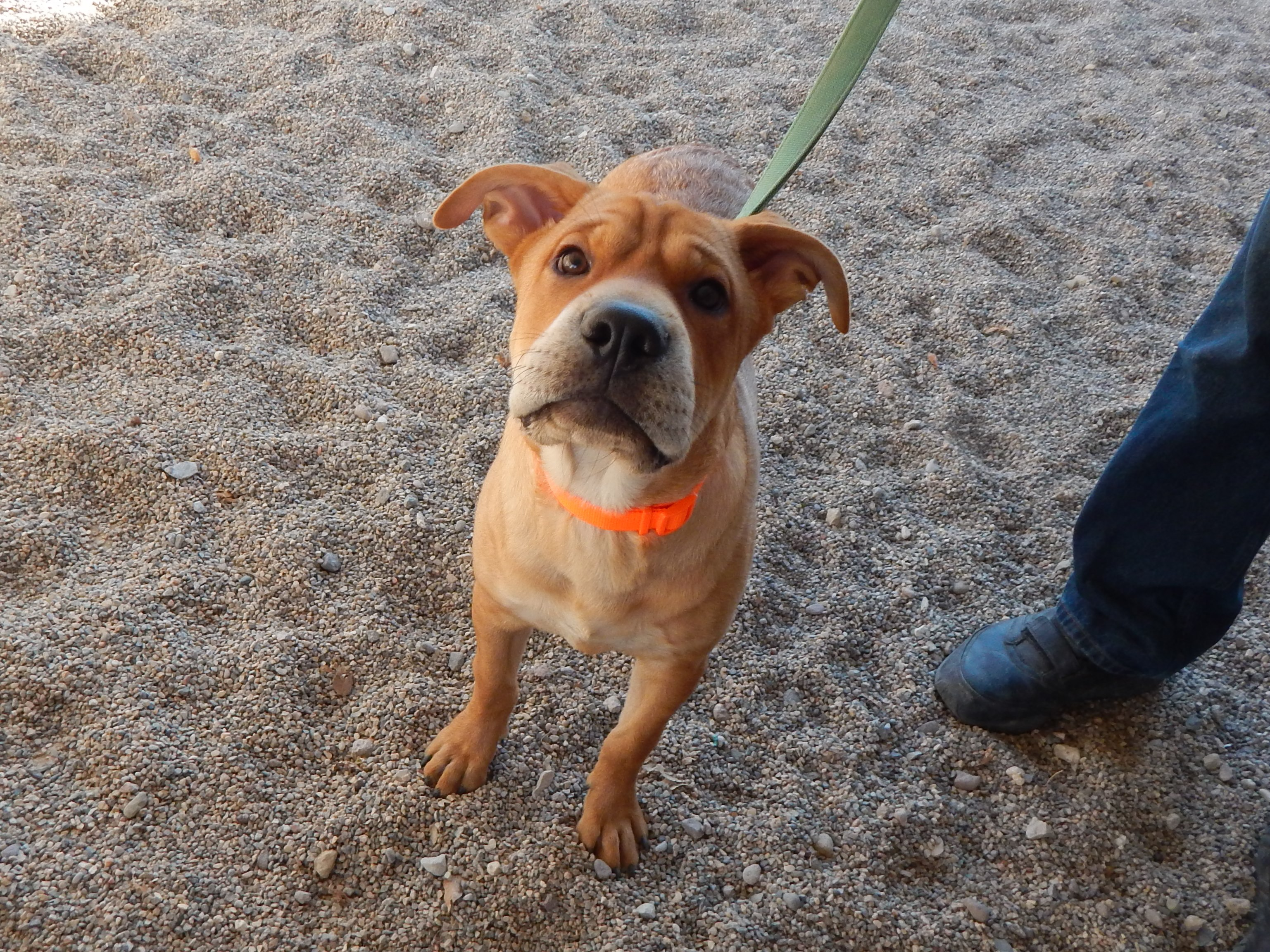 Mesquite Animal Shelter Pet Listing March 10, 2017