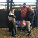 4-H Club fares well at livestock show