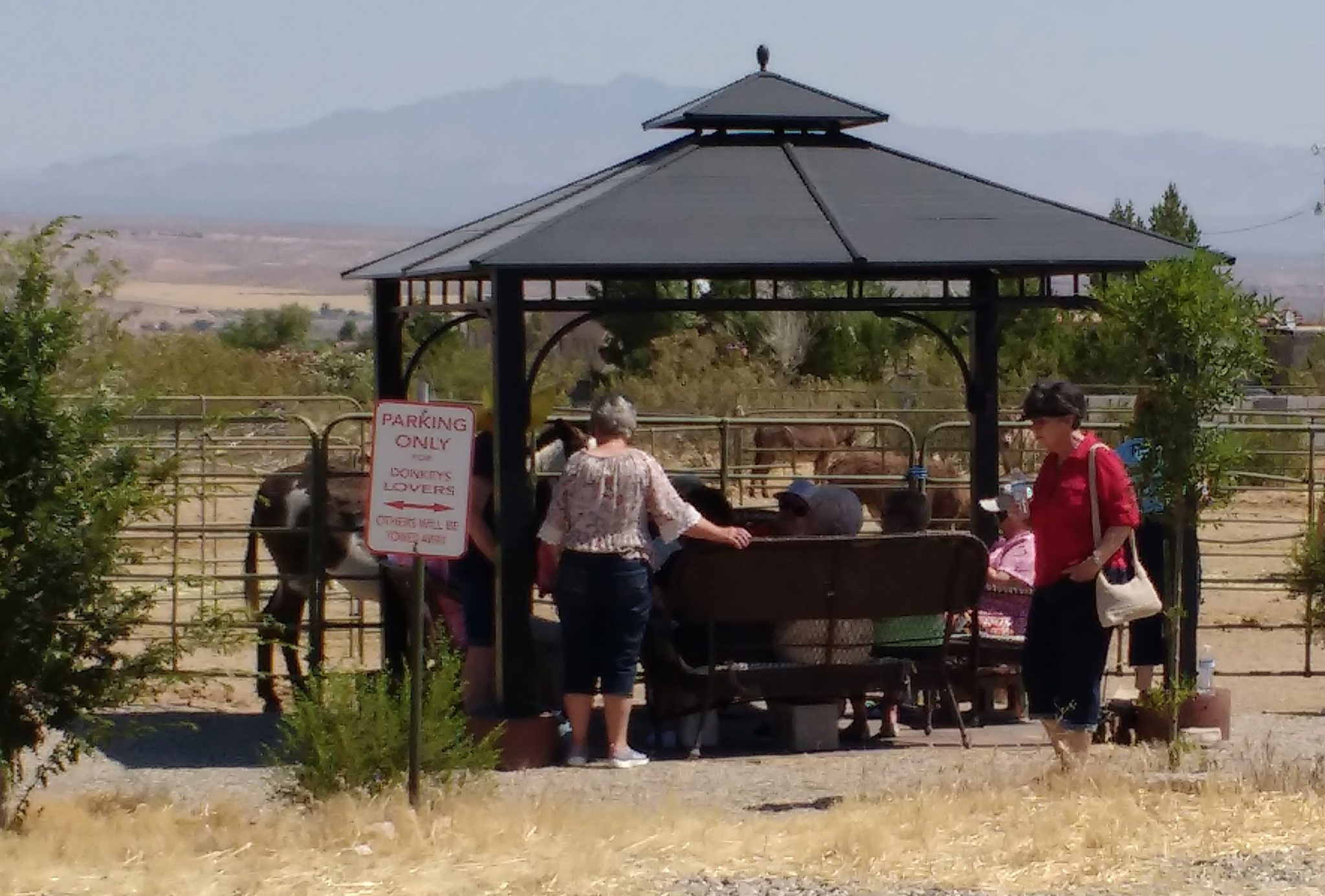 Tour group visits the donkey rescue.