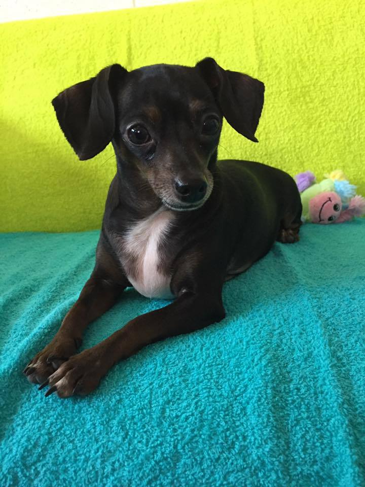 Mesquite Animal Shelter Pet Listing July 21, 2017