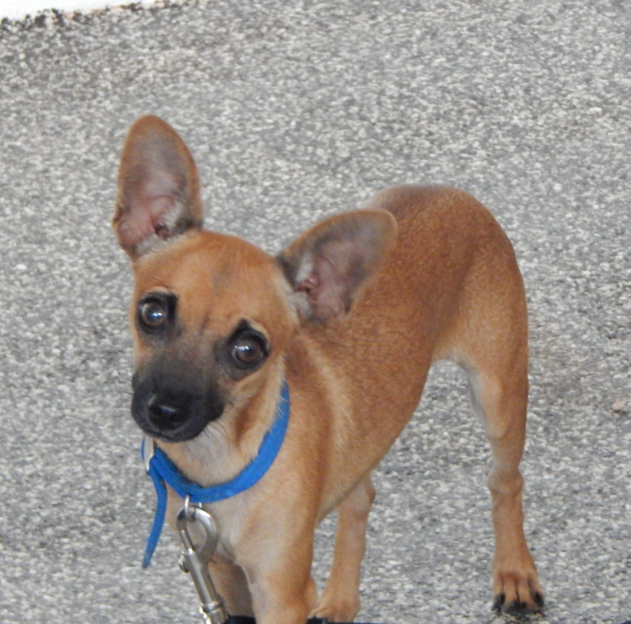 Mesquite Animal Shelter Pet Listing August 11, 2017