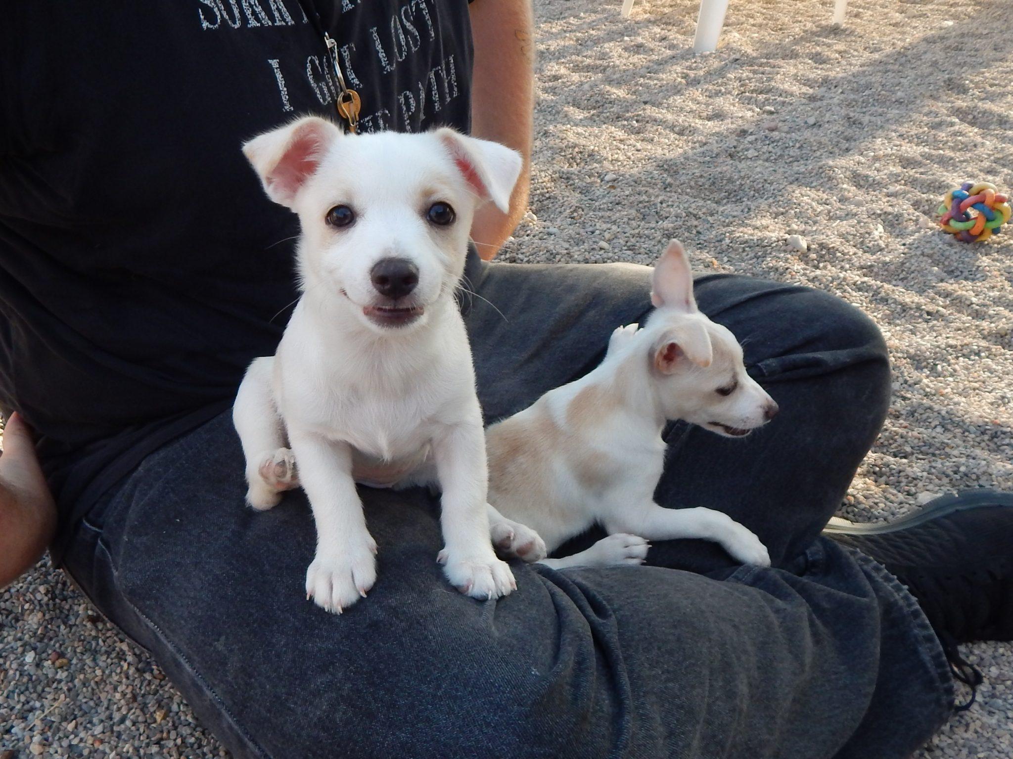 Mesquite Animal Shelter Pet Listing August 4, 2017