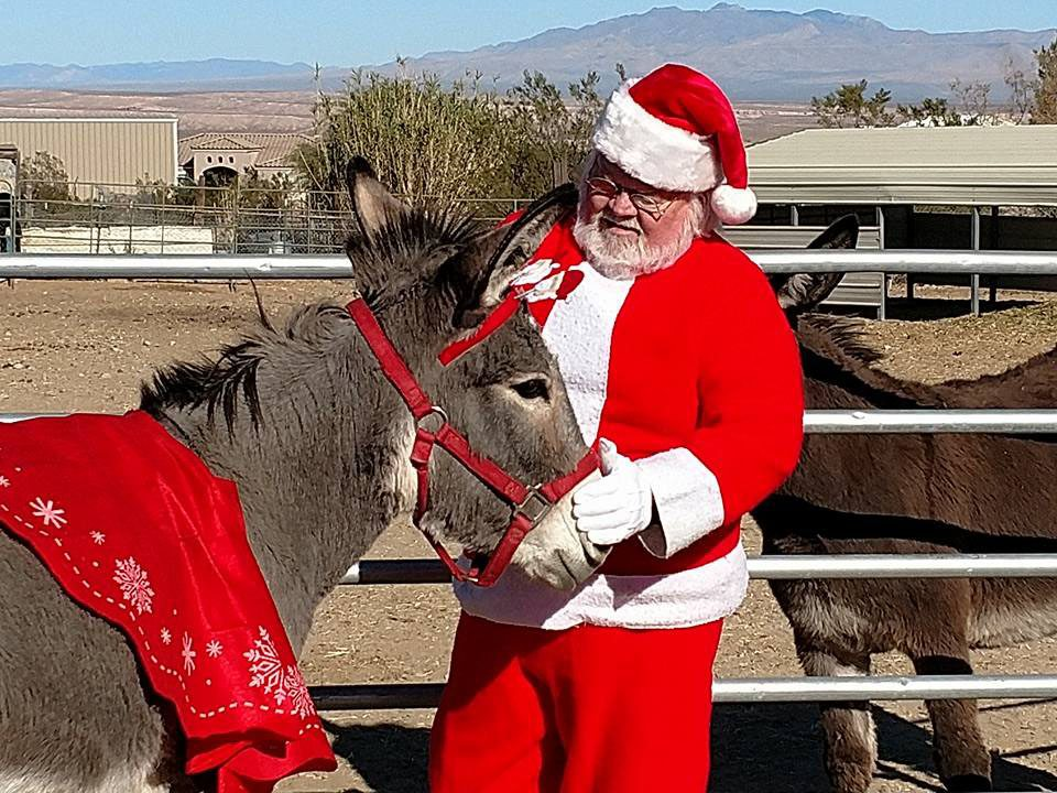 Save the date to spend Christmas with the donkeys