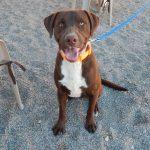 Mesquite Animal Shelter Pet Listing January 19, 2018