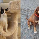 Mesquite Animal Shelter Pet Listing January 26, 2018